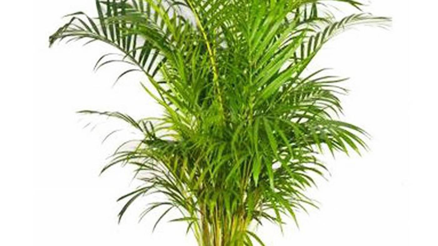 Le migliori piante per il bagno piante per - Piante per bagno ...