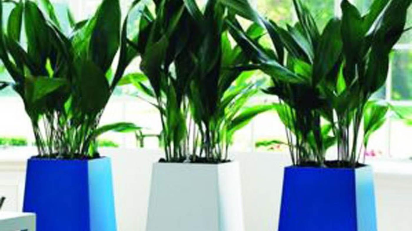Decorare con le piante quali coltivare in bagno guida giardino