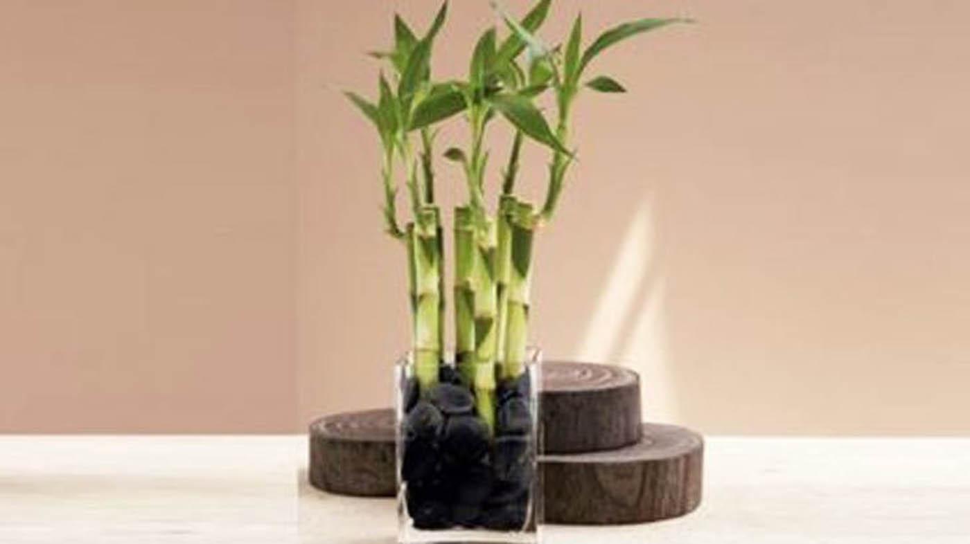 Quali piante usare per arredare il bagno bigodino