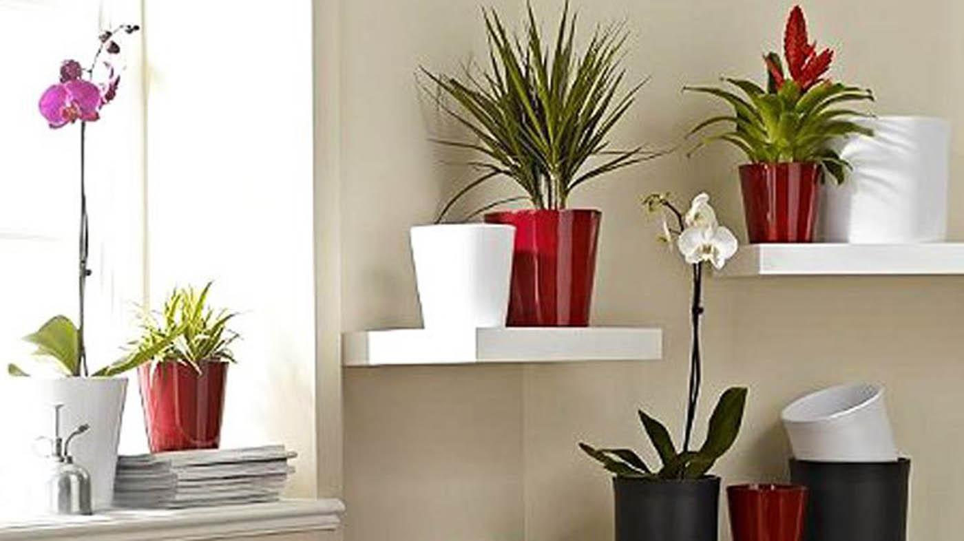 ▷ pavimenti per soggiorno piante per