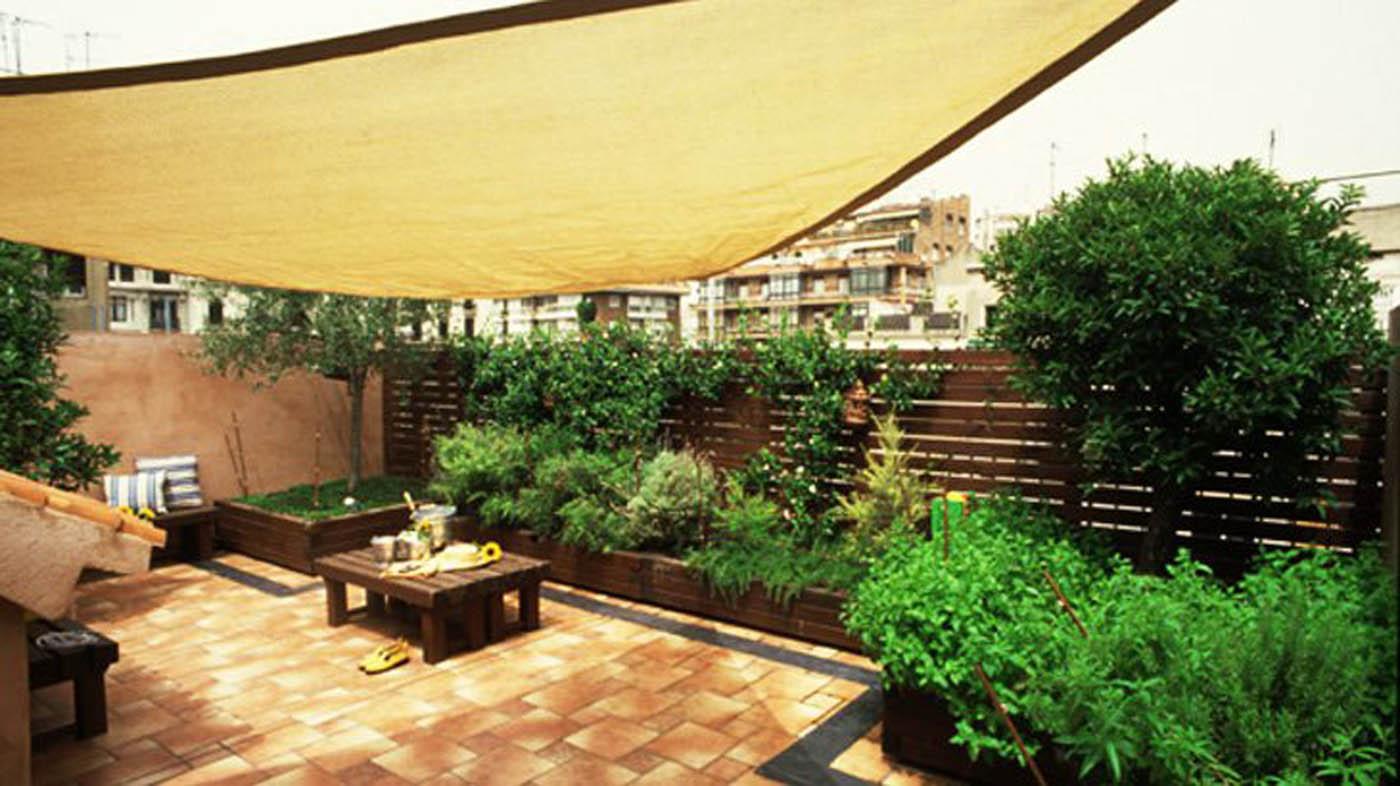 Terrazza piante per terrazze piante per for Piante per terrazzo