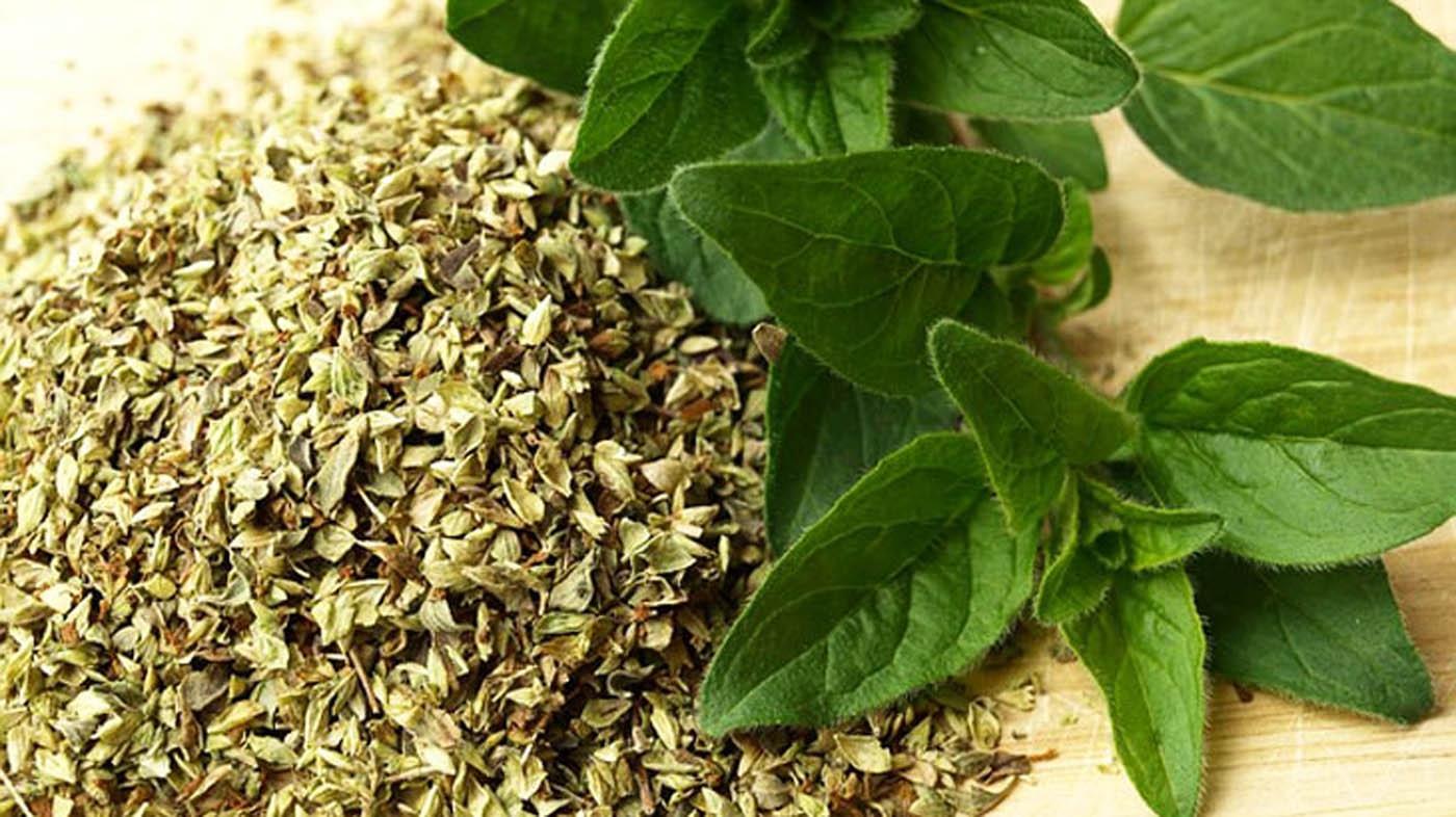 Pianta Simile Al Rosmarino ▷ piante da cucina - condimenti - piante per