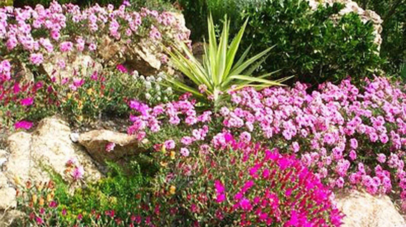 piante per piccoli giardini piante per