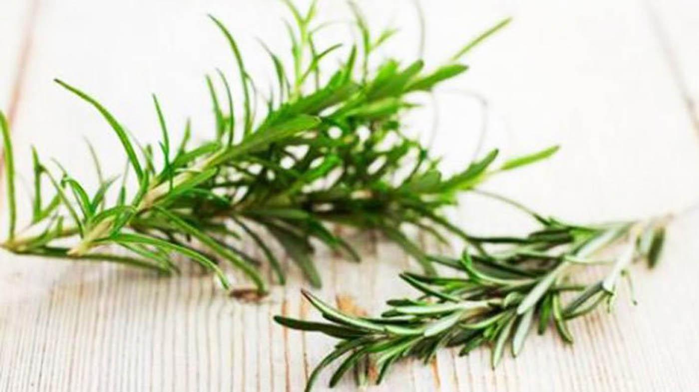 Pianta Simile Al Rosmarino ▷ usi di romero in gastronomia - piante per